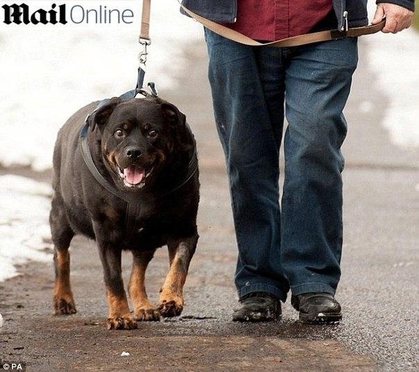 Reprodução/The Daily Mail