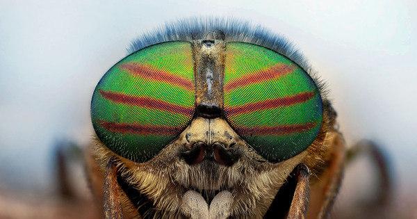 Veja os detalhes dos insetos mais incríveis do mundo - Fotos - R7 ...