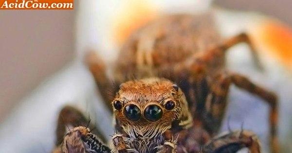 Esta aranha gigante pode comer seu passarinho! - Fotos - R7 Hora 7
