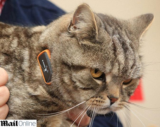 Ок гугл! Как помыть кота  Прикольные и интересные фото 10