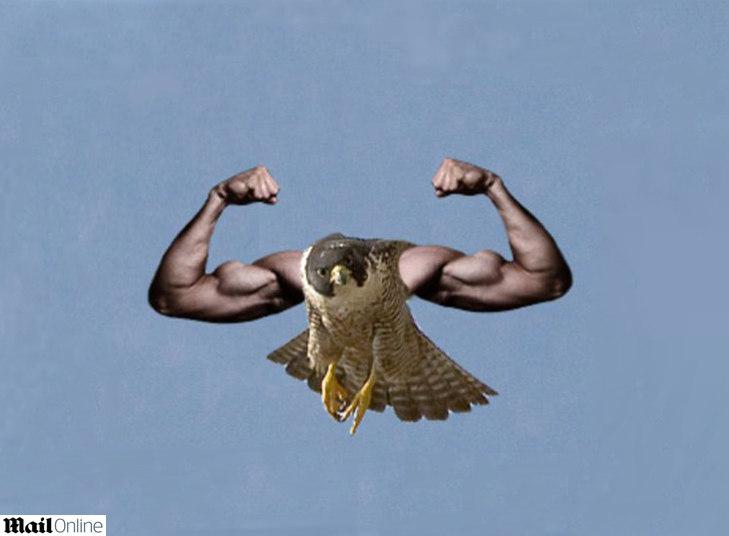 As montagens de pássaros com braços humanos já foram febre entre os internautas do mundo todo. Mas a onda, que parecia esquecida, voltou com tudo em abril de 2013