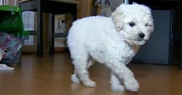 """""""Fiquei transtornado com o vídeo"""", diz vizinho que adotou cão ..."""