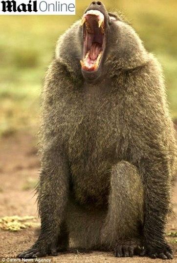 O reino animal gosta mesmo é de chorar de rir!