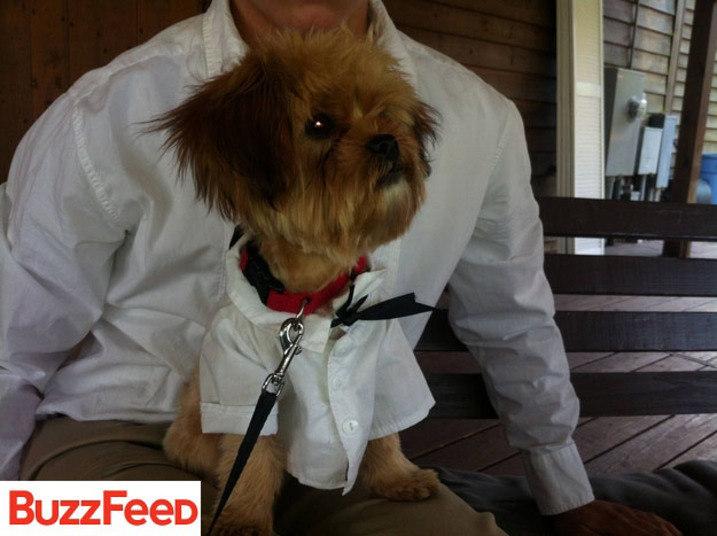 Será que esse cãozinho tem ideia de quão fofo será seu passeio até o altar?