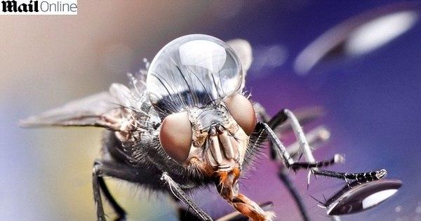 Impressionante! Usando gotas d'água, fotógrafo transforma insetos ...