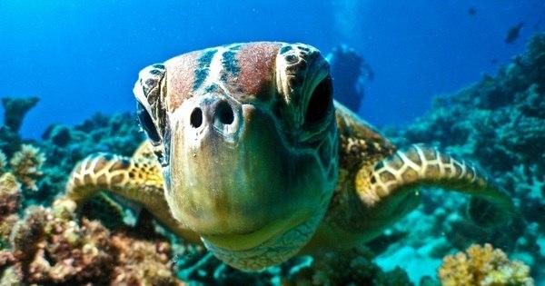 Haja fôlego! Fotos incríveis do fundo do mar vão te fazer perder a ...