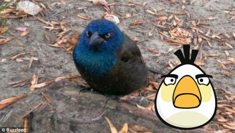 Na Finlândia, existe um parque de diversão inspirado em Angry Birds, conheça!