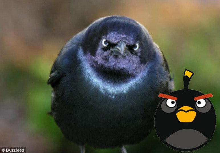 Segundo informações do Daily Mail, as pessoas gastam cerca de 300 milhões de minutos por dia jogando Angry Birds