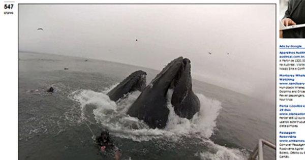 Vídeo mostra mergulhadores quase sendo engolidos por baleias ...