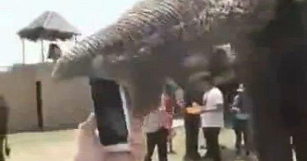 Elefante devora iPhone de japinha lerda - Notícias - R7 Hora 7
