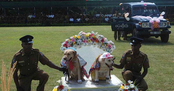Casamento coletivo de cães causa polêmica no Sri Lanka - Fotos ...