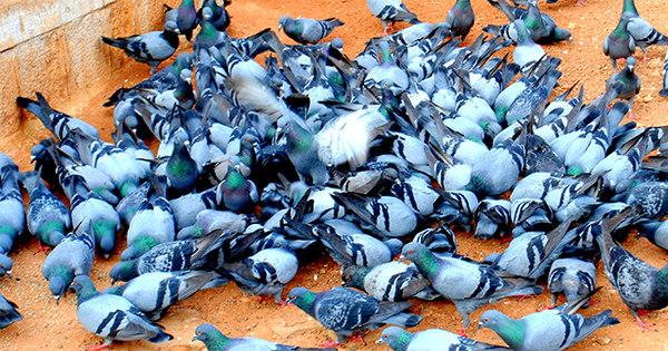 Pombos invadem escola e crianças ficam sem aulas na Grande BH ...
