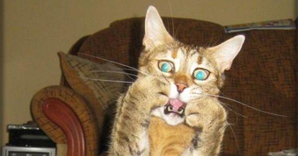 Morra de rir com as fotos mais engraçadas da semana - Fotos - R7 ...