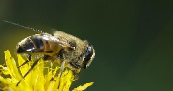 Picada de abelha pode provocar dores e levar à morte - Notícias ...