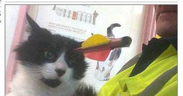 Essa doeu! Gato leva flechada na cabeça e sobrevive - Fotos - R7 ...