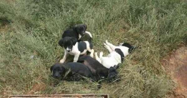 """Cães são """"jogados no lixo"""" no sul de Minas Gerais - Notícias - R7 ..."""
