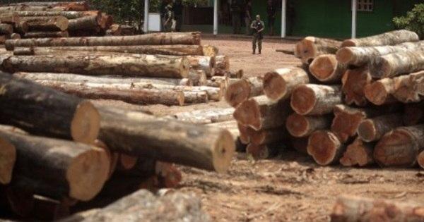Dados de satélite indicam que desmatamento está acelerando no ...