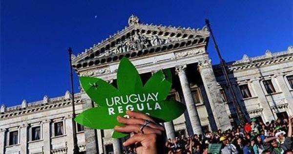 Legalização da maconha: tema polêmico é alvo de debate e ...