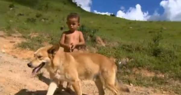 Cão salva dono de apenas 3 anos ao se perderem em mata ...