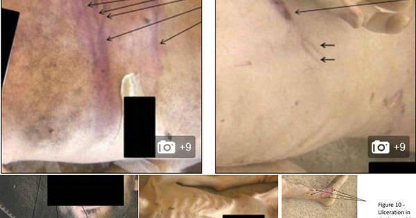 Olhos arrancados e eletrochoque: fotos revelam que Síria torturou e ...