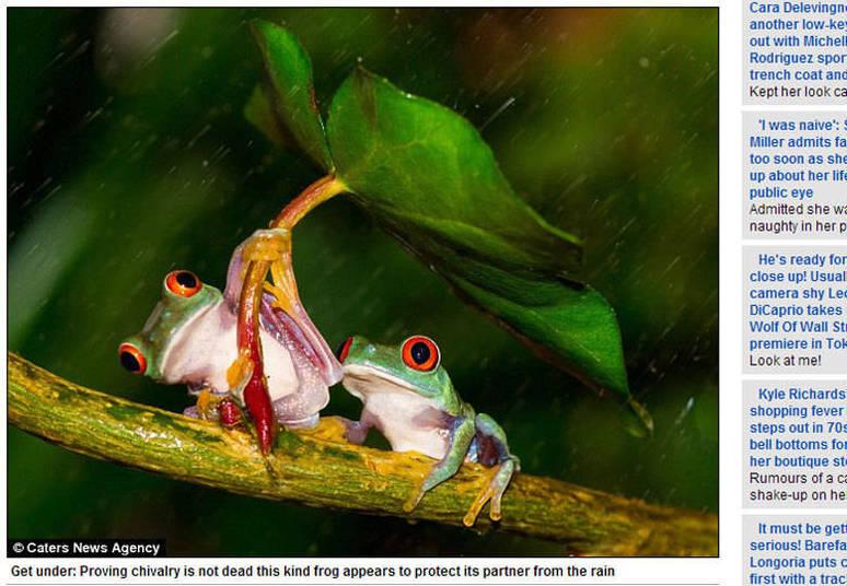 O gesto amável entre os animais foi flagrado pelo fotógrafo amador Kutub Uddin, de 27 anos