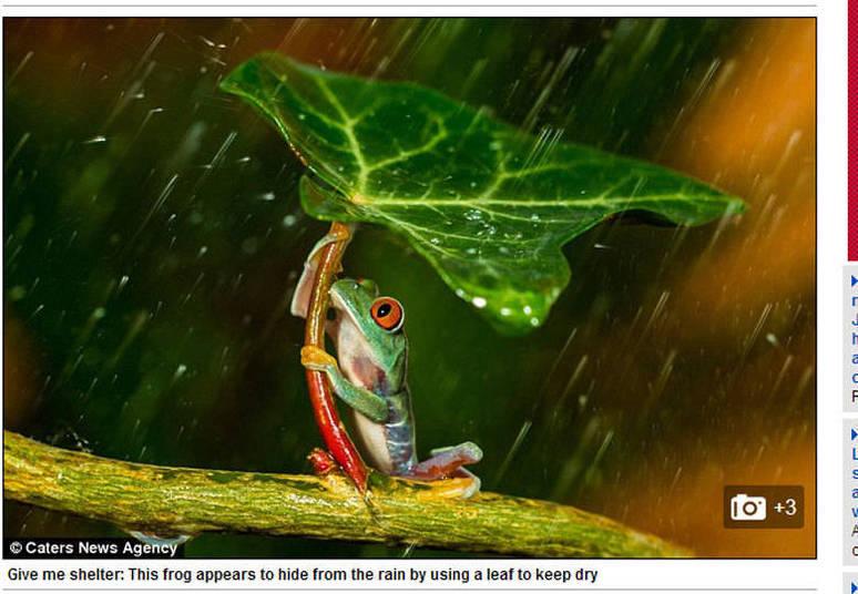 Os pequenos animais viveram no quintal do fotógrafo durante quatro meses
