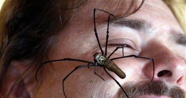 Sem discussão: a Austrália tem as aranhas mais cabulosas - Fotos ...