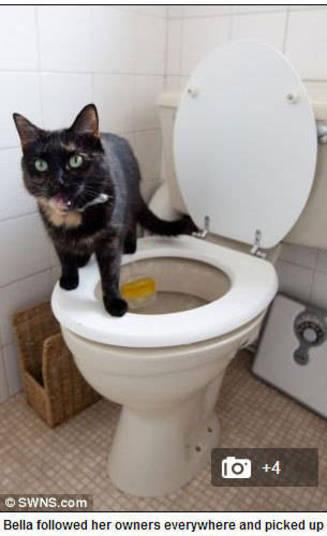 Mas Alley não é o único felino que faz isso, não. Bella, uma gatinha esperta, também aprendeu a usar o banheiro