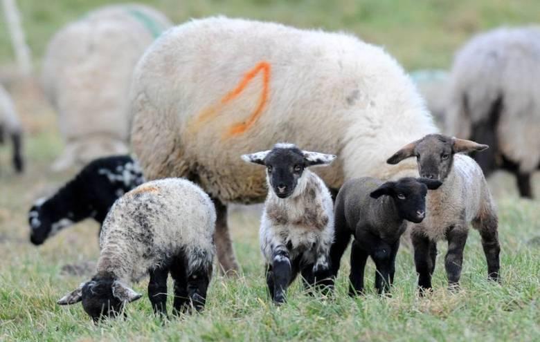 Os animais são recém-nascidos e se divertiram na presença dos mais velhos