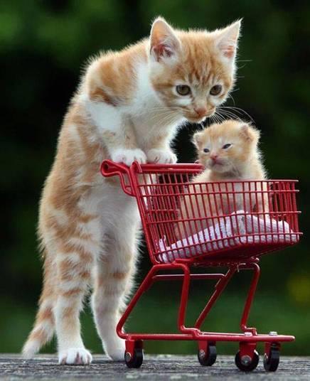 Bateu preguiça no gatinho e a mamãe logo tratou de poupá-lo da caminhada