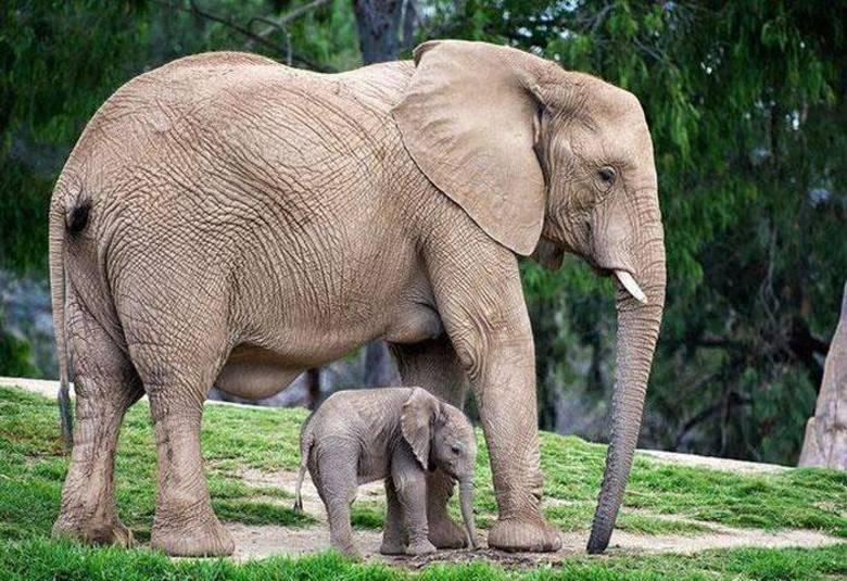 Até o gigante elefante já foi um dia pequenininho!
