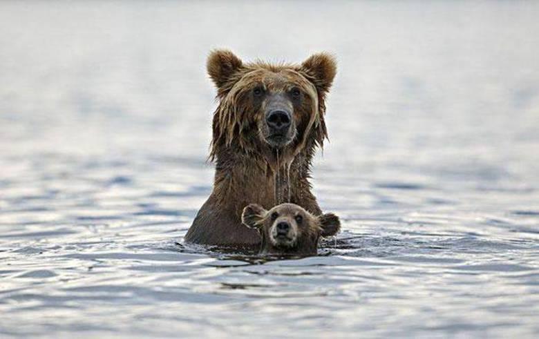 Ursinho e ursão se refrescam juntos! Quase que o filhote se afoga, hein?