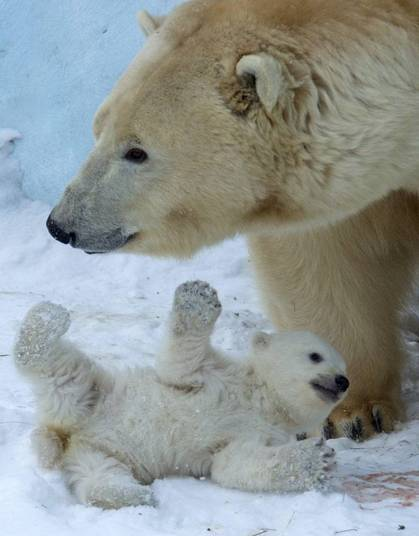 Gerda não sai de perto do seu filhotinho. E, pelo visto, ele também não quer desgrudar da mamãe!