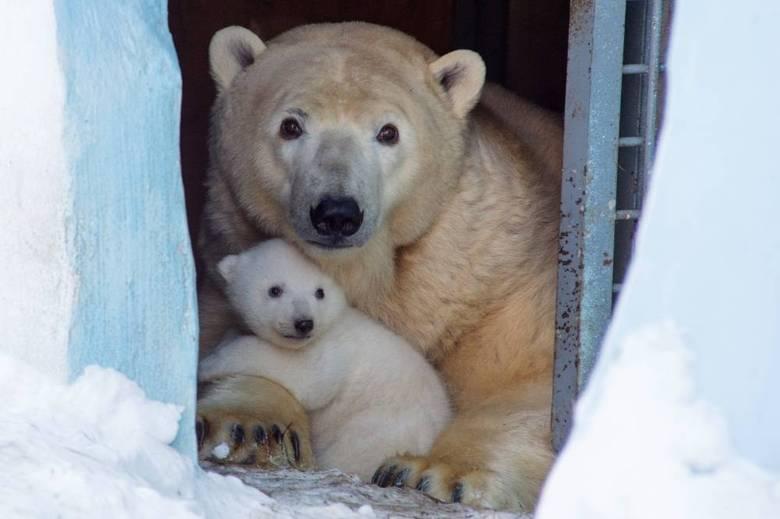 A família vive na cidade de Novosibirsk, na Rússia