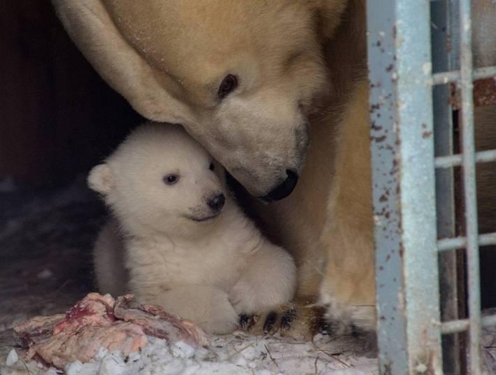 Os pais do filhote são os ursos Kai e Gerda