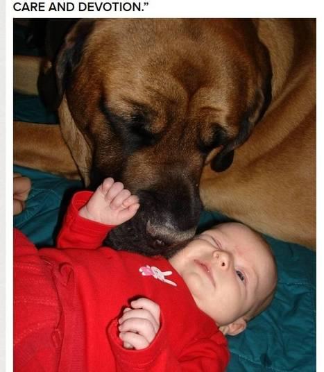 Sim, os 'beijos molhados' dos cães podem parecer estranhos no começo, mas você se acostuma