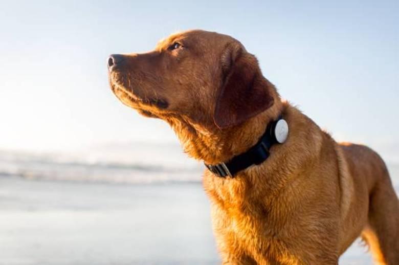 O Whistle é um dispositivo para cães que transmite leituras básicas sobre a saúde do bichano para o seu dono. O quanto beberam de água, se estão agitados ou calmos, quanto tempo dormiram... Essas são algumas informações que o acessório disponibiliza