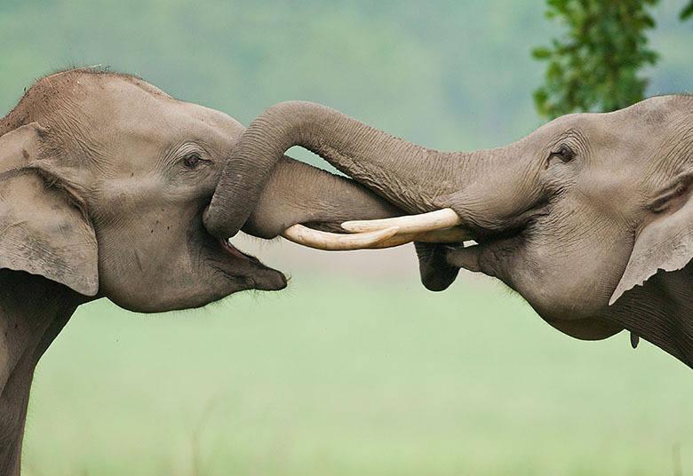 Mesmo selvagens, os animais têm lindas demonstrações de afeto e amizade. Os elefantes, por exemplo, foram flagrados se abraçando com as trombas