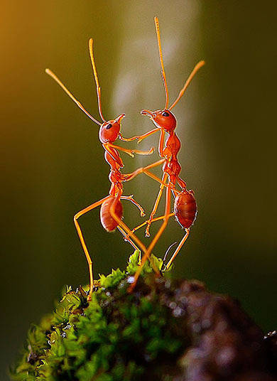 Essas formiguinhas foram flagrados dando as mãos