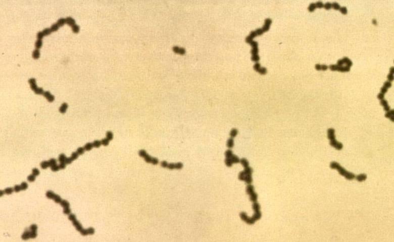 Cientistas descobriram recentemente que as bactérias devoradoras de carne tem um caminho evolutivo assustadoramente simples. Em apenas 35 anos, a Fasciite necrosantepassou de 'agente inofensivo' a 'terror infeccioso'. Apesar do apelido, ela não consome de fato carne, mas produz uma proteína que destrói pele, gordura e músculos em um curto período de tempo