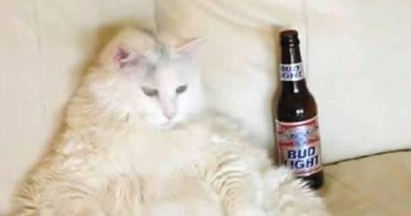Coisa fofa! Como não amar estes gatos gorducinhos - Fotos - R7 ...