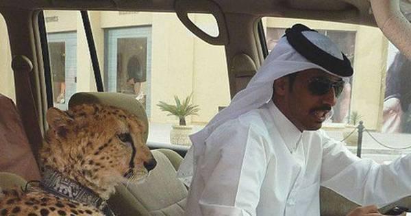 Luxo, bizarrice e mico: árabes ricaços adoram esbanjar vida boa e ...