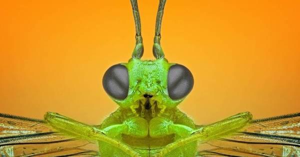 Fotógrafo faz ensaio com insetos bem de perto e mostra os detalhes ...