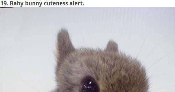 Eles vão te conquistar! Conheça os animais mais fofos e irresistíveis ...