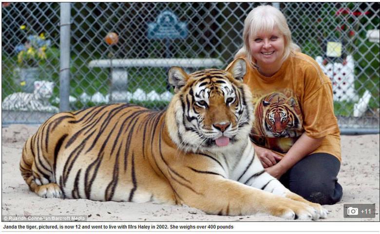 Saber é o trigre branco e Janda, a fêmea, vivem em uma gaiola na parte de trás da casa de Janice em Orlando, na Flórida