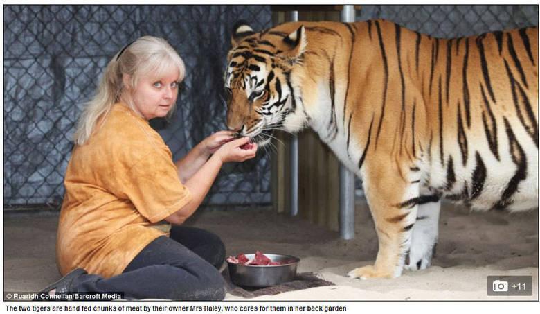 Em 2002 ela comprou Janda, que agora está com 12 anos de idade para viver com Chuffer. Após a morte do segundo tigre, ela decidiu comprar Saber, com apenas duas semanas de idade na época