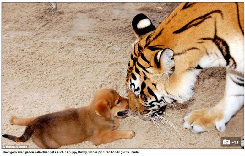 Mas como ela consegue? Há 20 anos, Haley deixou o emprego como assistente de administração para passar mais tempo com os animais e, em seguida, fez um curso de especialização de cuidadora de animais selvagens