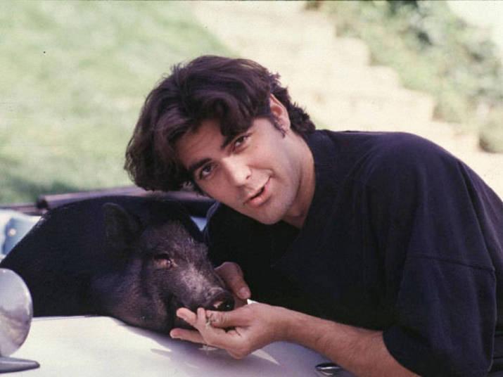 Durante 20 anos, George Clooney teve um porco como animal de estimação. Ele morreu em 2006+ Opine: Você teria um animal exótico em casa?