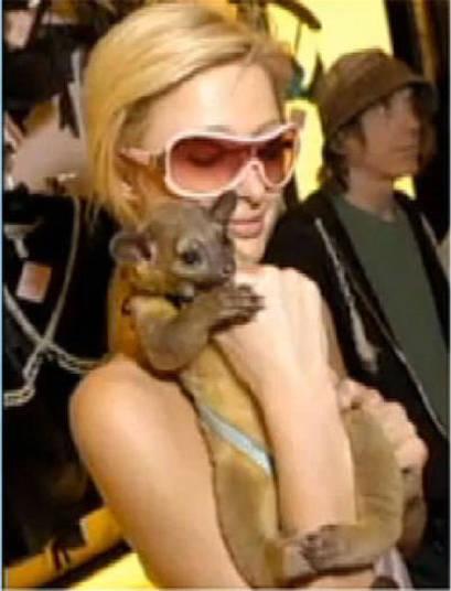 Entre os pets de Paris Hilton, destaca-se o exótico jupará+ Opine: Você teria um animal exótico em casa?