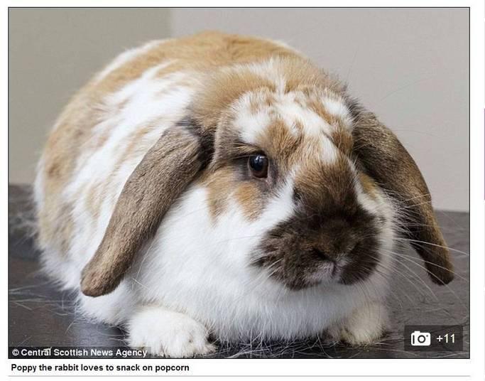 Outra participante da competição é a coelha Poppy, que é viciada em pipoca